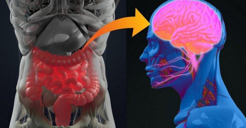Мозг и кишечник имеют неразрывно связаны. Кто бы мог подумать