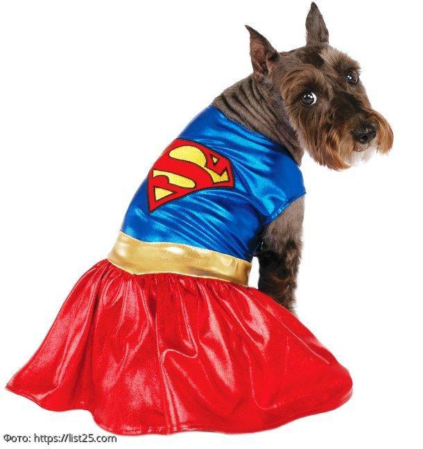 ТОП-10 самых смешных костюмов для собак на Хэллоуин