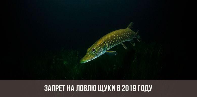 Запрет на ловлю щуки в 2019 году