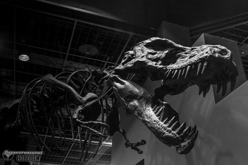 Теория о динозаврах, переживших падение астероида - Paranormal-news.ru