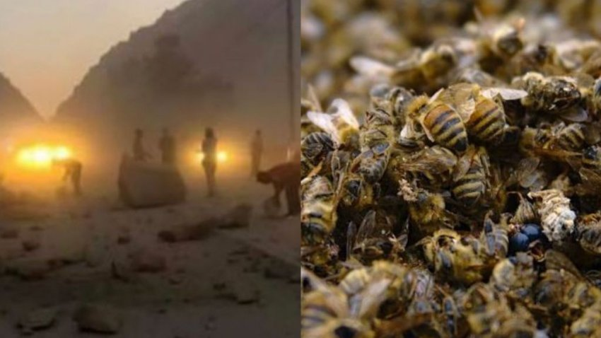 Пчелы в Калифорнии чувствуют приближение катастрофы