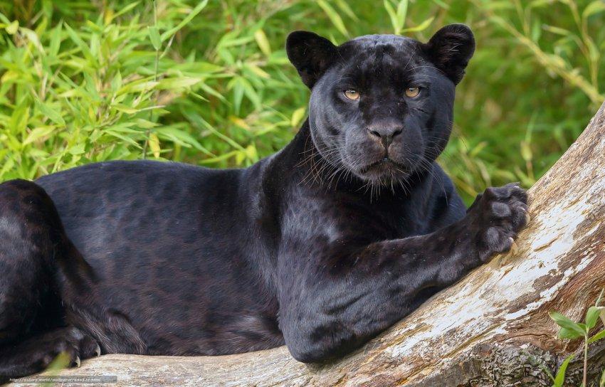 На какое животное вы похожи по знаку Зодиака?