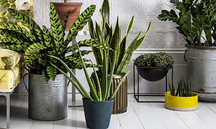 Домашние волшебники: комнатные растения меняющие жизнь к лучшему