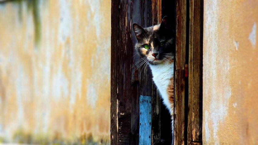 Приметы о входной двери и пороге: на них стоит обратить свое внимание