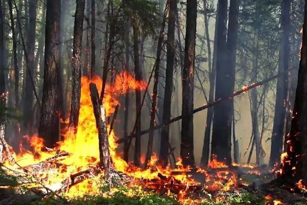 Жириновский назвал причину лесных пожаров в Сибири