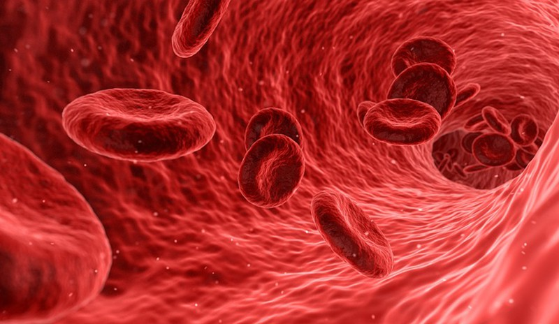 Названа группа крови, с которой люди живут дольше всех