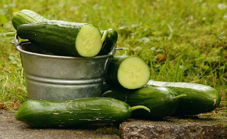Заготовки из переросших огурцов - наши любимые рецепты
