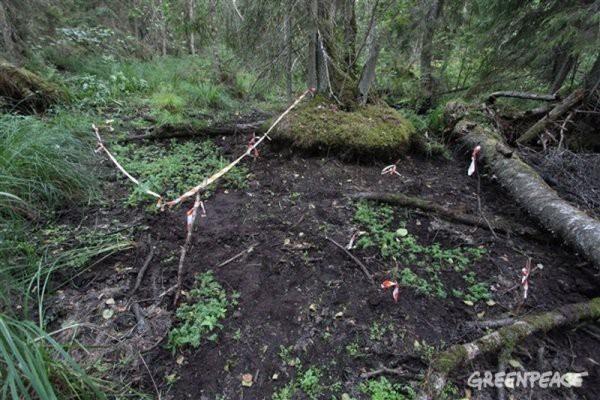 Строительство газопровода «Северный поток 2» - уничтожение природы