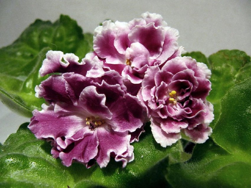 Комнатные цветы, приносящие людям пользу: 4 растения для счастливчиков