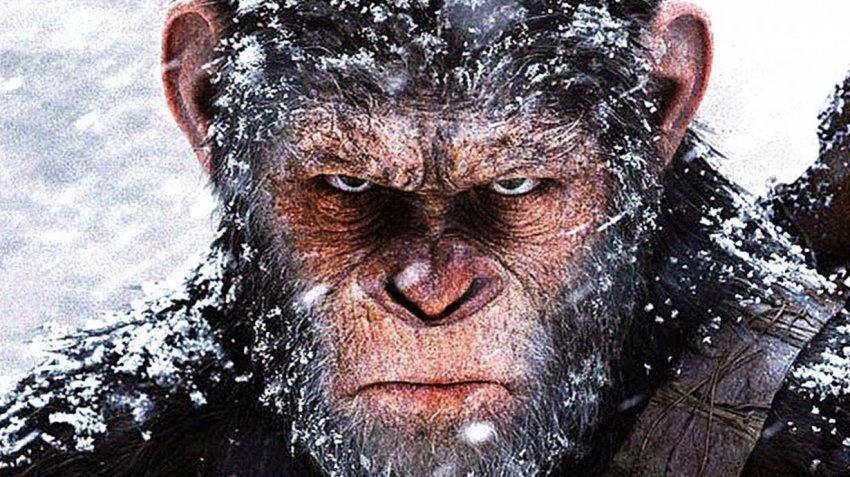 Создан первый в мире гибрид обезьяны и человека