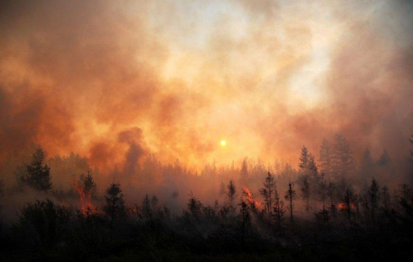 Горящая Россия: кто виноват в лесных пожарах?