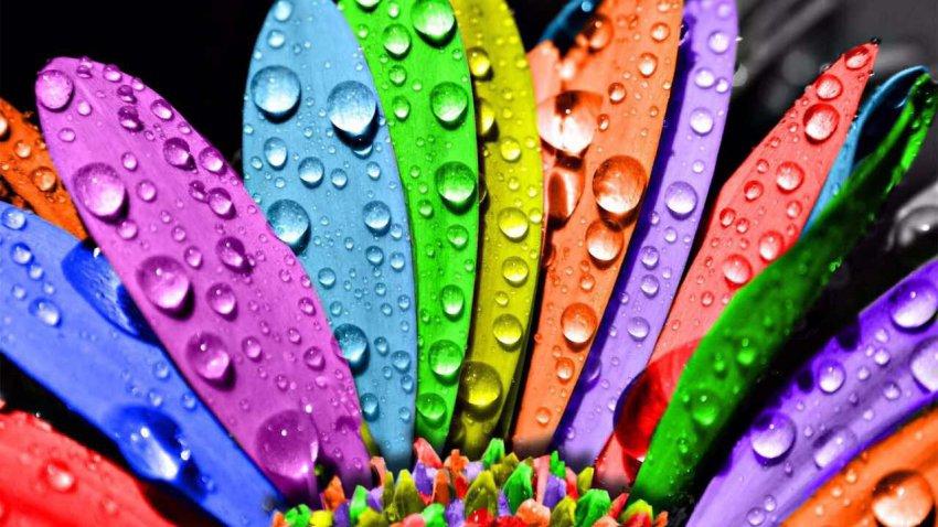 Василиса Володина назвала пять самых счастливых дней августа