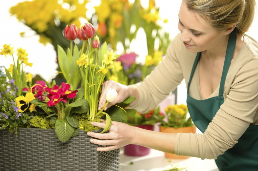 Комнатные цветы, положительно влияющие на атмосферу дома: они приносят счастье и удачу
