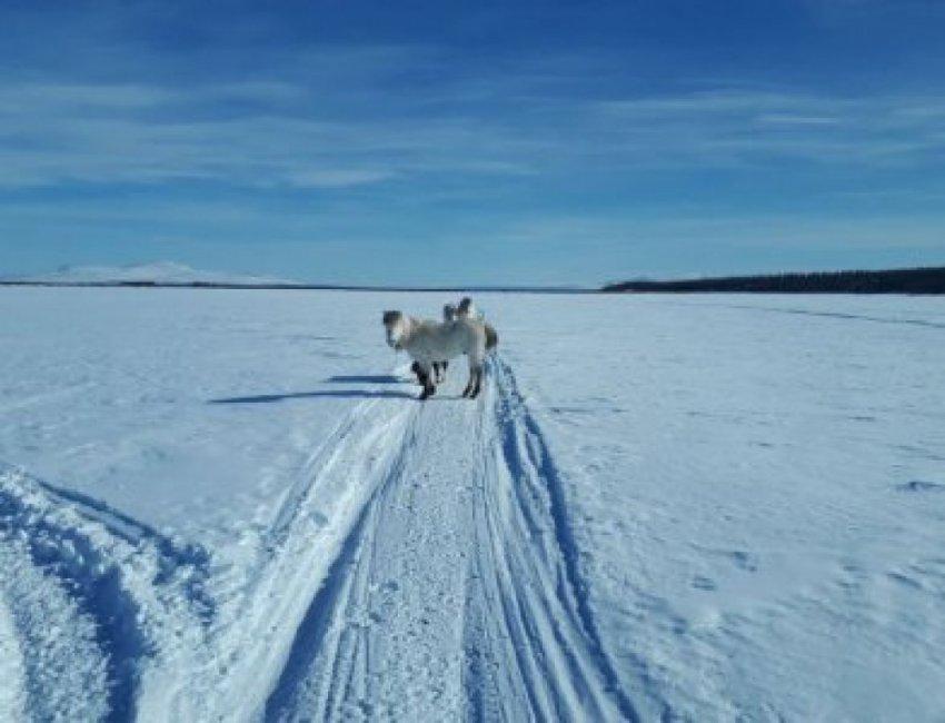 Как Сибирь может спасти мир от экологической катастрофы