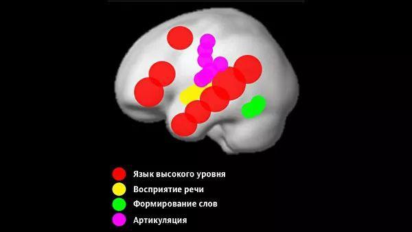 Где рождается мысль и как язык может тормозить развитие мозга