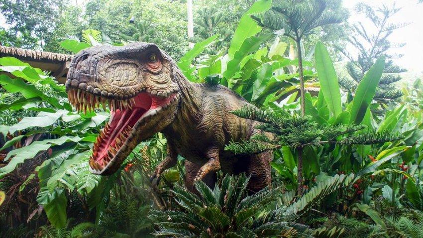 Археологи нашли черепаху, раздавленную динозавром 150 млн лет назад