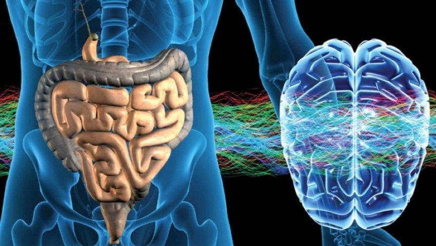 Кишечная микрофлора: получить больше энергии из меньшей пищи