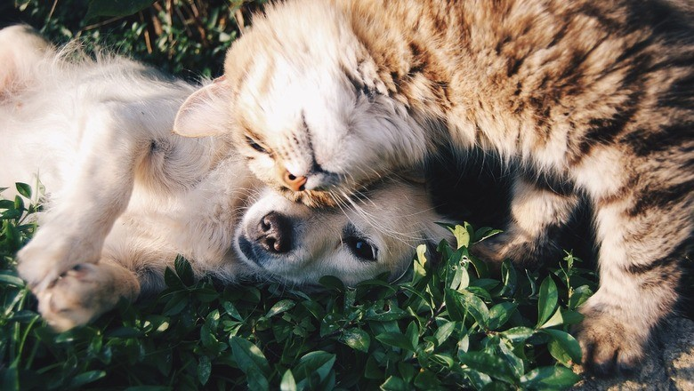 Митинг против жестокого обращения с животными проведут в Волгограде 2 ноября 2019 года