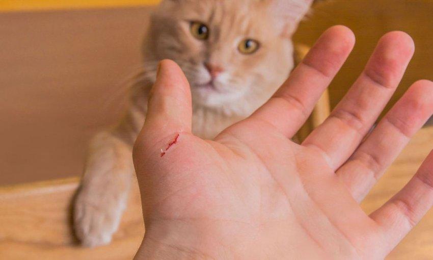 В Москве возбудили уголовное дело против мужчины, который котом избил полицейского