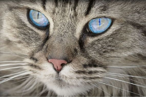 На Украине кот задушил 9-месячную девочку
