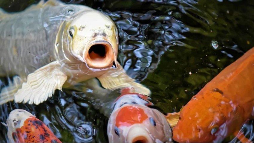 В Великобритании выловили рыб, напичканных наркотиками: ученые не могут найти объяснение этому