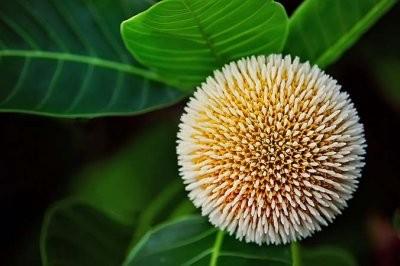 Ученые нашли растение, которое успешно борется с раком