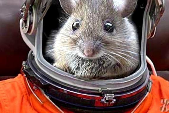 На Землю с космического путешествия на МКС вернулись супермыши