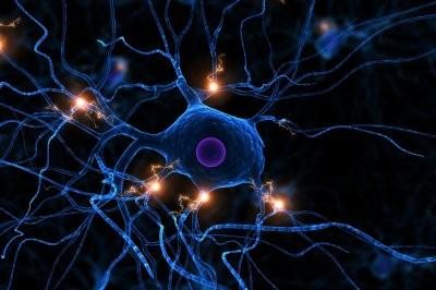Ученые создали механизм, который способствует росту и регенерации поврежденных нервов