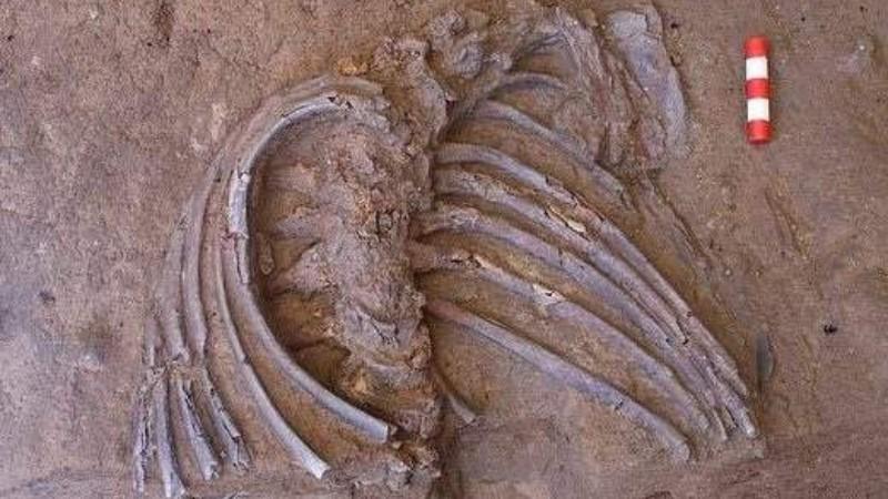 В Ираке нашли скелет неандертальца возрастом 70 000 лет