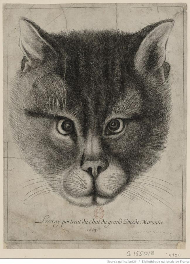 ТОП-8 фактов из истории котиков на Руси