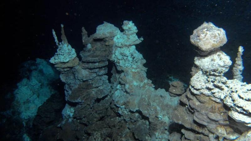 В Атлантическом океане обнаружена «хламидийная бомба»