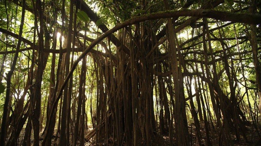 Через 15 лет амазонские леса будут не поглощать углекислый газ, а выделять его