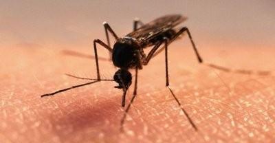 Названы 5 продуктов, которые помогут при укусах комаров