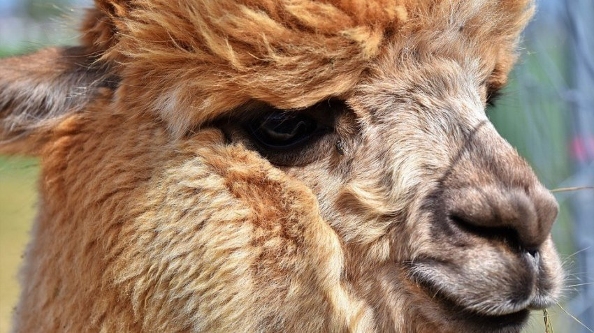 В борьбе с Covid-19 могут помочь животные: неожиданное заявление ученых