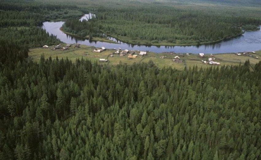 Леса регулируют климат и производят ветер - Теория биотического насоса