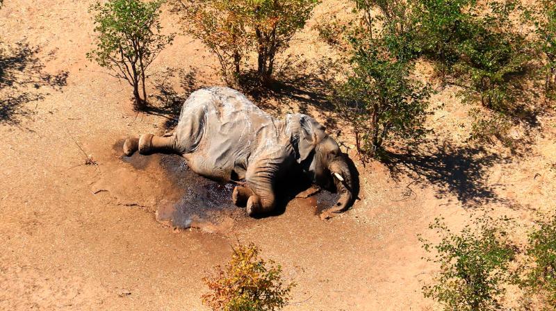 Названа возможная причина массовой гибели слонов в Южной Африке