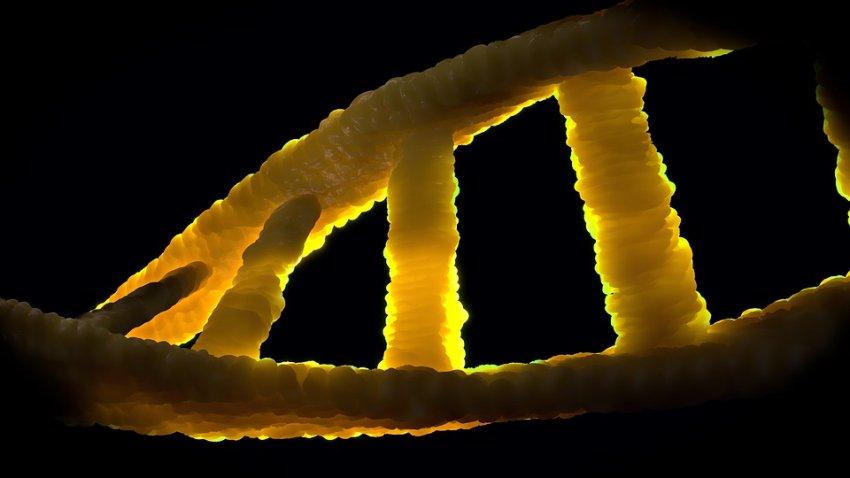 Неизвестный предок: в геноме современного человека обнаружена чужая ДНК