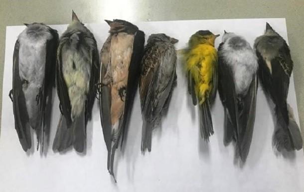 В Нью-Мексико при загадочных обстоятельствах массово гибнут птицы