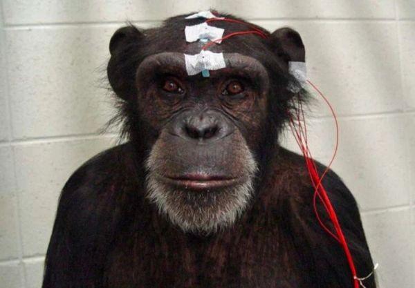 Будущее нейронаук: будут ли использовать мозг как оружие?