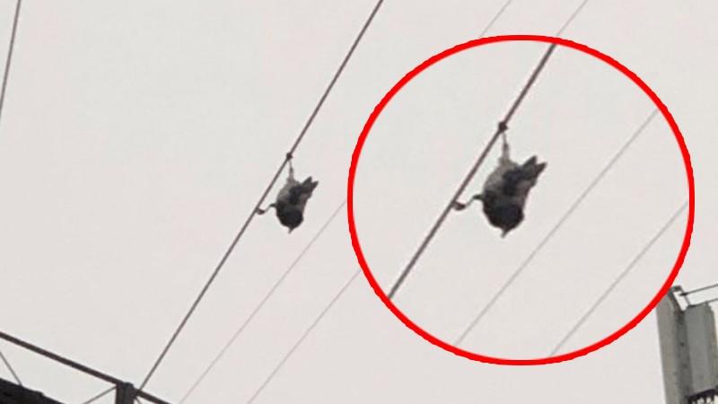Ворона, висящая головой вниз, озадачила пользователей Сети