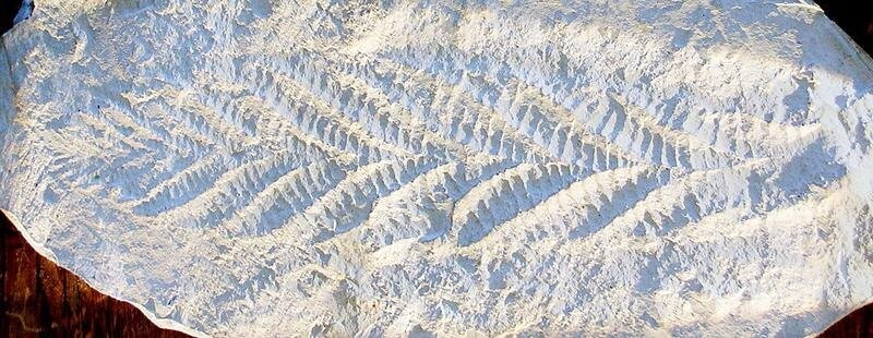 Что из себя представляла жизнь на Земле миллионы лет назад?