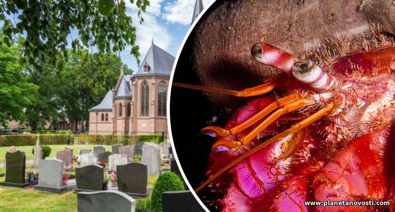 Раки, выращенные в лаборатории, захватили бельгийское кладбище