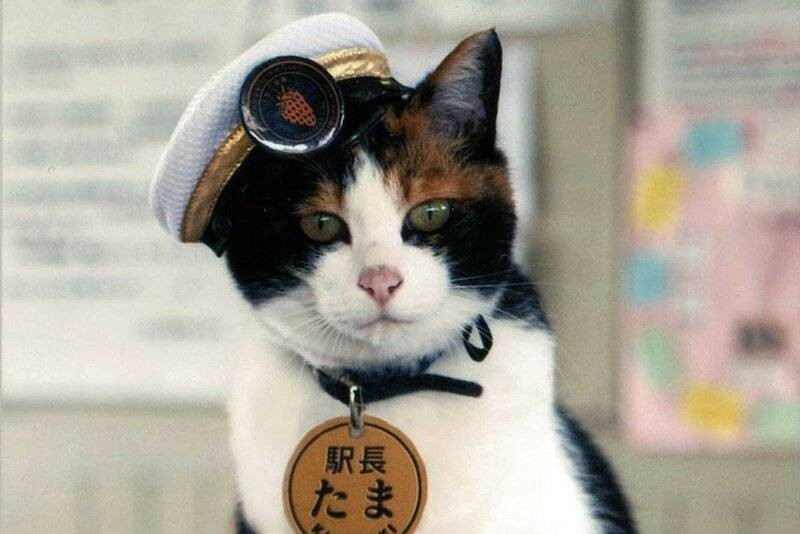 Какие животные в Японии смогли помочь железной дороге эффективно бороться с кризисом