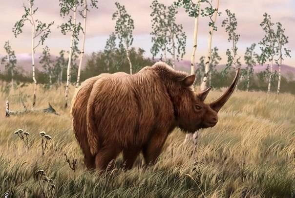 У ученых есть повод утверждать, что Россия – родина носорогов