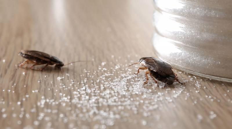 Нашествие тараканов в России ожидается в феврале 2021 года