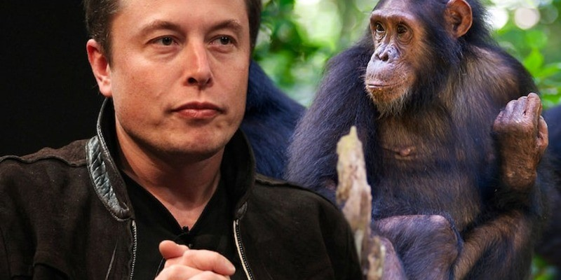 Илон Маск научил обезьяну играть в видеоигры силой мысли с помощью нового чипа Neuralink