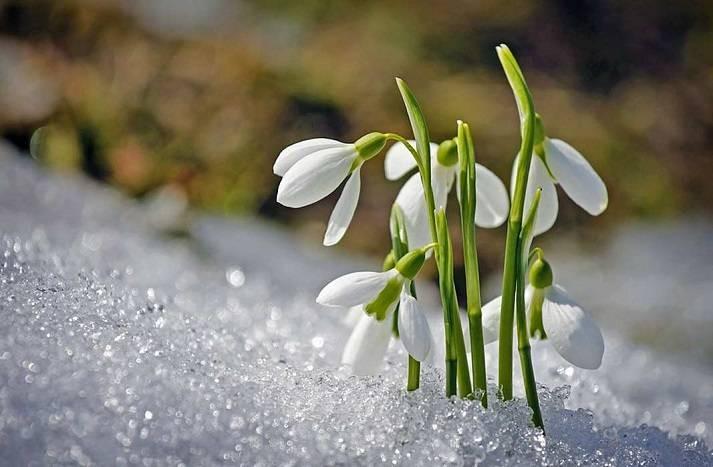Синоптики рассказали о том, когда в Россию придет настоящая весна в 2021 году