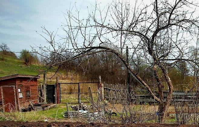 В России предложили вовлекать в хозяйственный оборот заброшенные садовые участки