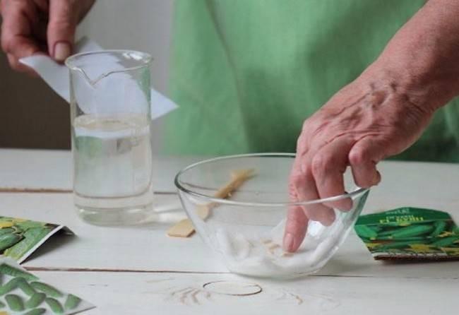 Как правильно замачивать семена в перекиси водорода для здоровой рассады