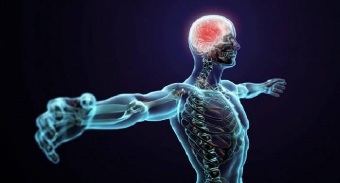 Какие органы и части тела растут у человека на протяжении всей жизни